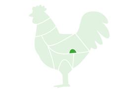 Gesier-Poulet-surgele-jem-food-trading-2